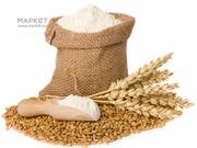 Продам пшеницу 4 класса мягкого сорта,  муку,  из Казахстана